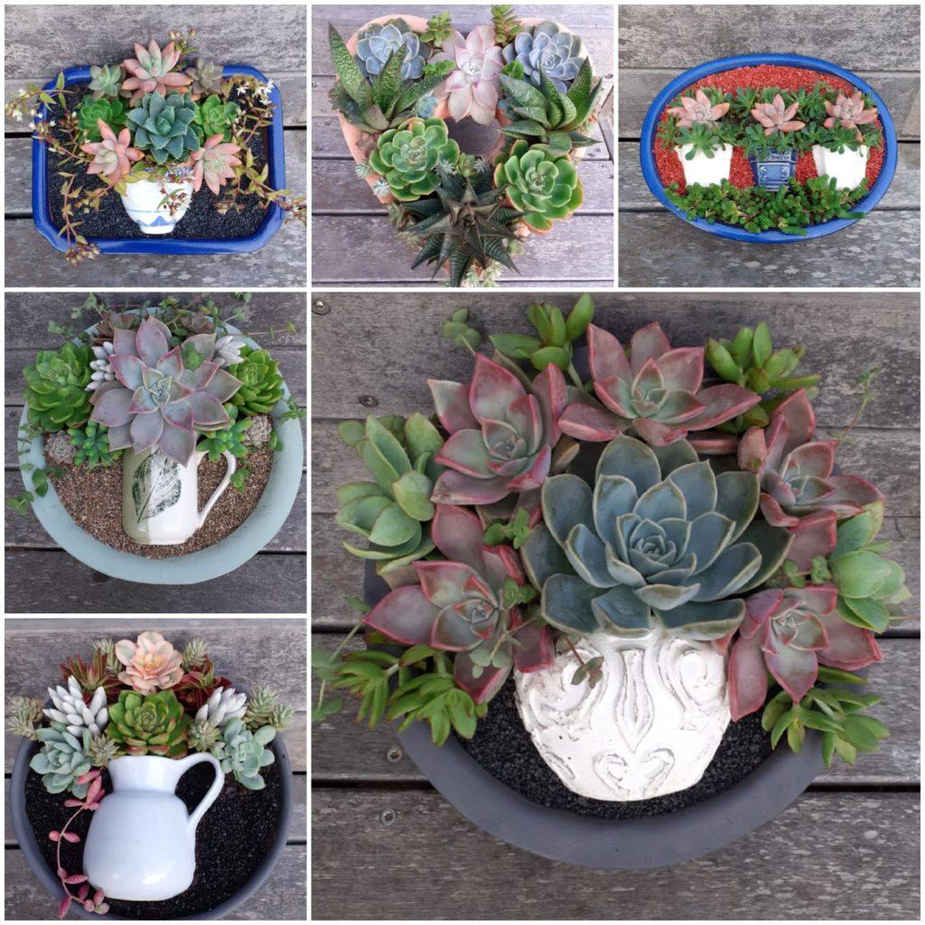 marina-da-gama-gardening